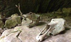 Воронцовская пещера, наследие древнего мира в Сочи