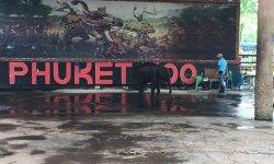 Зоопарк Пхукета, стоит или нет его посещать?