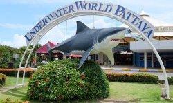 Стоит ли вашего внимания океанариум Паттайи (Underwater World)?