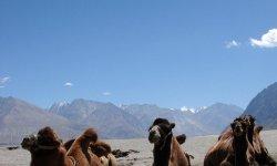 Индия, что брать с собой отправляясь в поездку