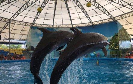 Дельфинарий на Пхукете, место где вам понравиться…