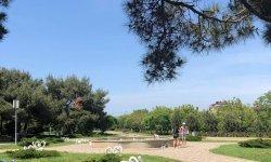 Парк Ореховая роща – прогулка среди роз