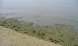 Когда цветет море в Анапе и насколько это неприятно