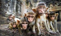 Пхра Накхон – главное наследие Аютайи или достопримечательности Тайланда