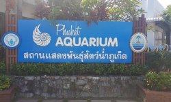 Стоит ли посещать океанариум Пхукета?