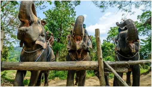 Слоновая радость