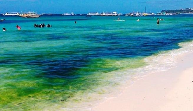 Цветущее море