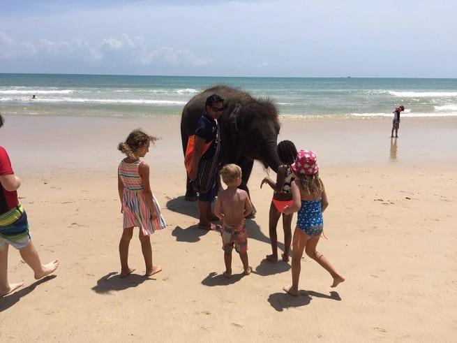 Прогуливающийся слоненок
