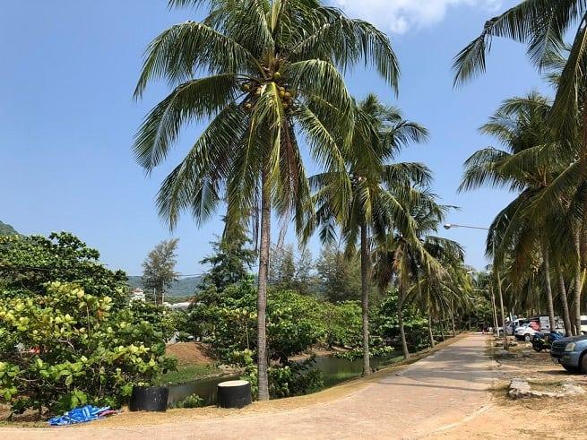 В тени пальм