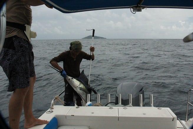 Рыба-меч на крючке