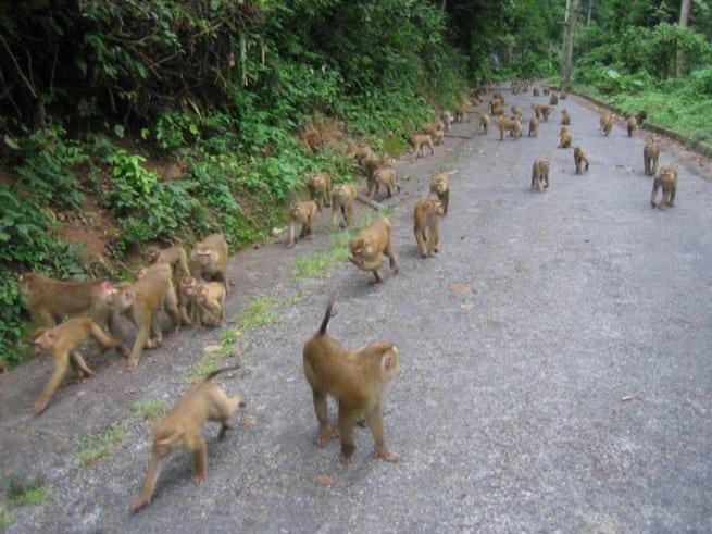 Нашествие обезьян
