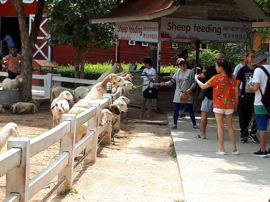 Загон для овец