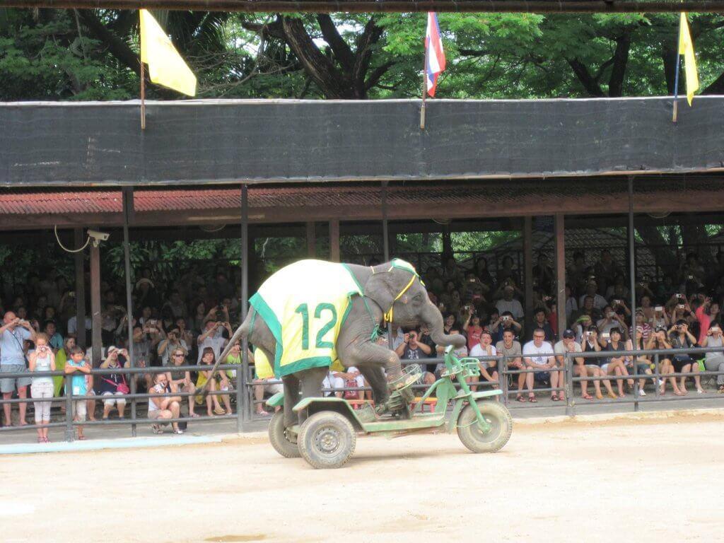 Слон на автомобиле
