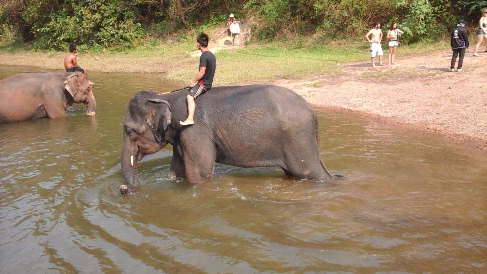 Купание со слонами
