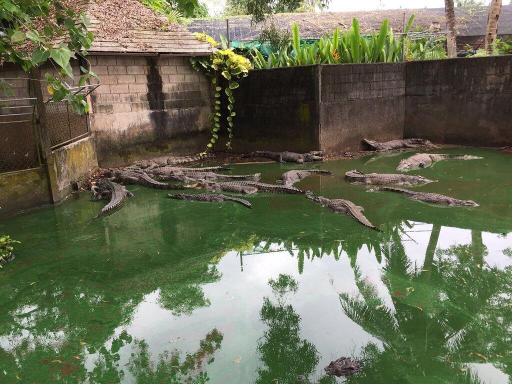 Крокодилы в лежке