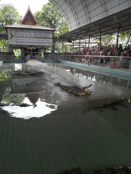 рядом с крокодилами