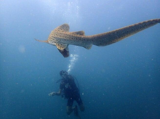 Под водой интересно