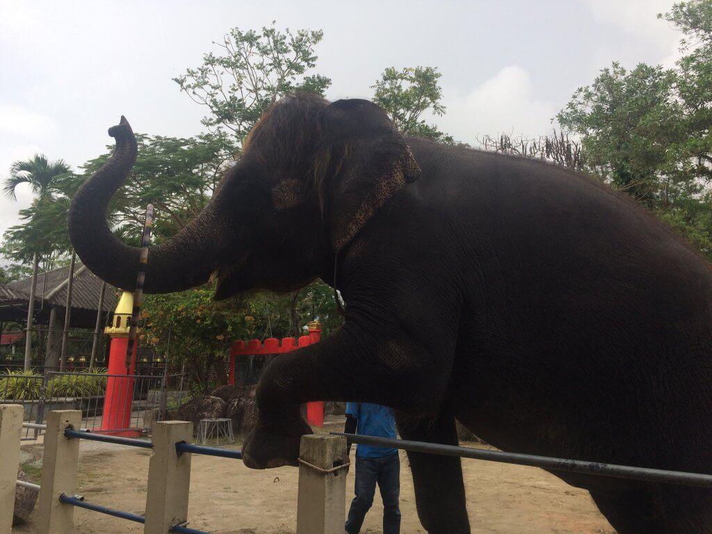 На шоу слонов