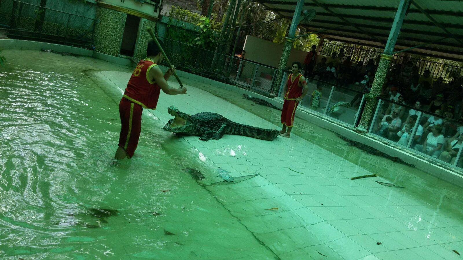С крокодилами только силой