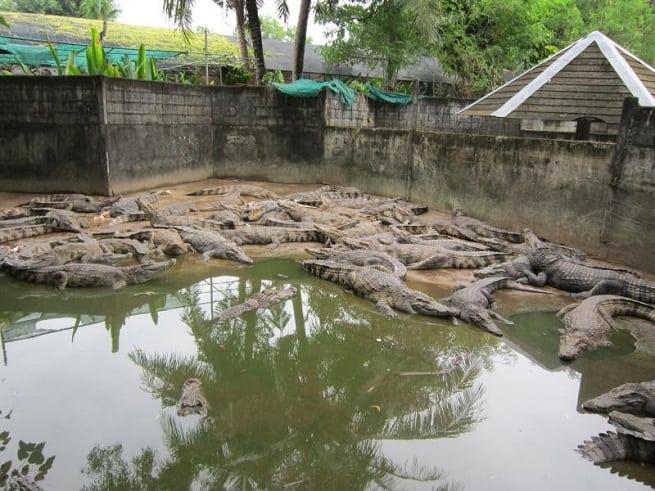 Вольер с крокодилами