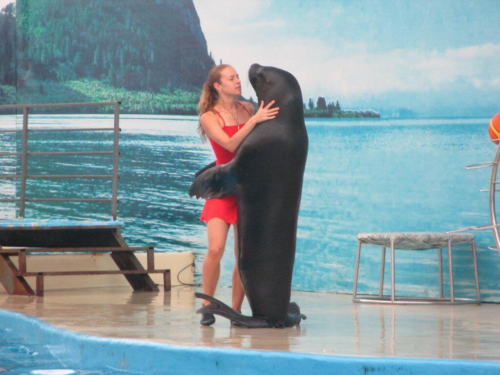 Танец с тюленем