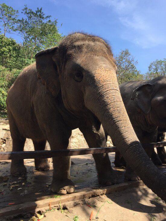Привередливый слон