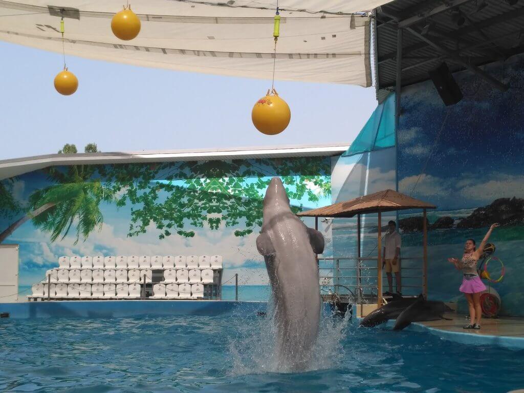 Выпрыгивающий дельфин