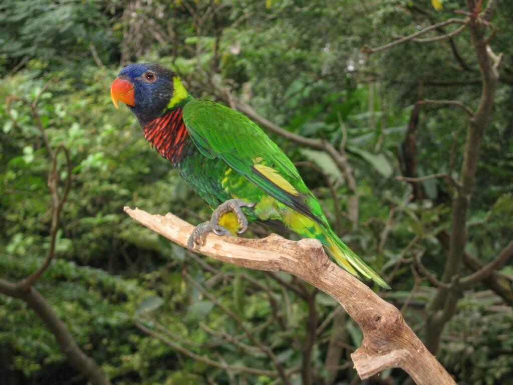 Задумчивый попугай