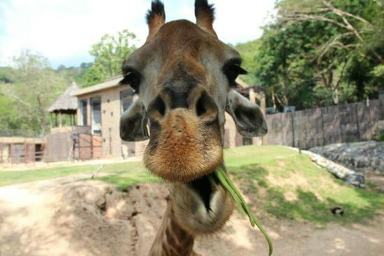 Зоопарк Кхао Кхео Паттайя - подробный обзор.