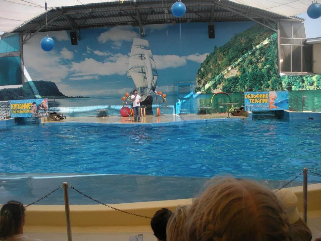 Арена дельфинария