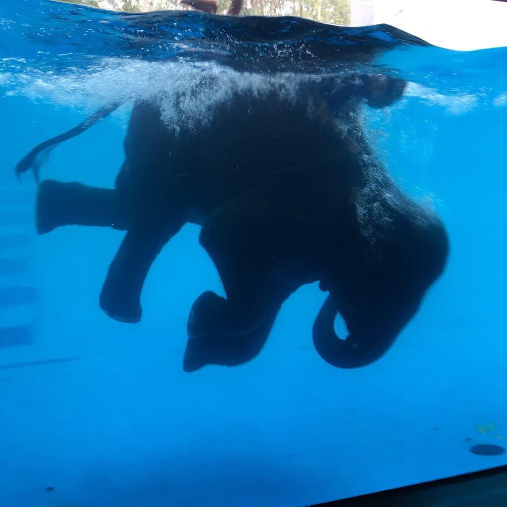 Ныряющий слоненок