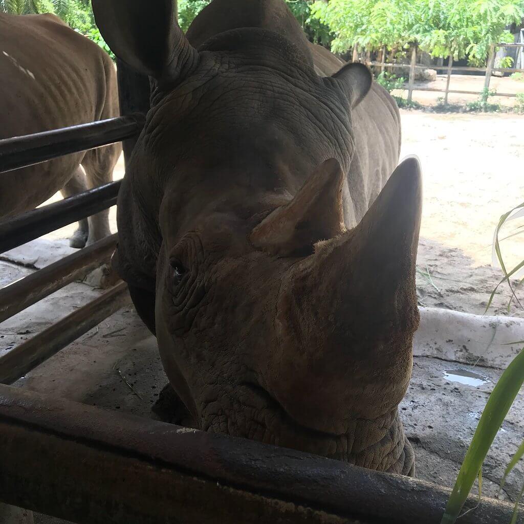 Носороги в вольере