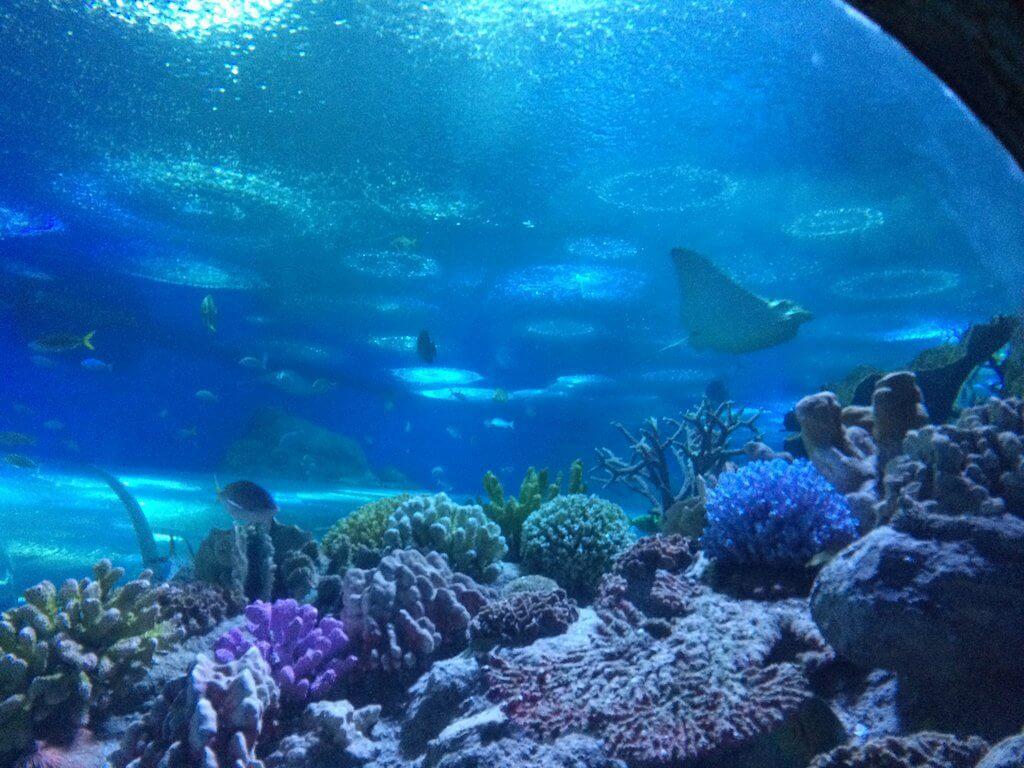 В недрах океана