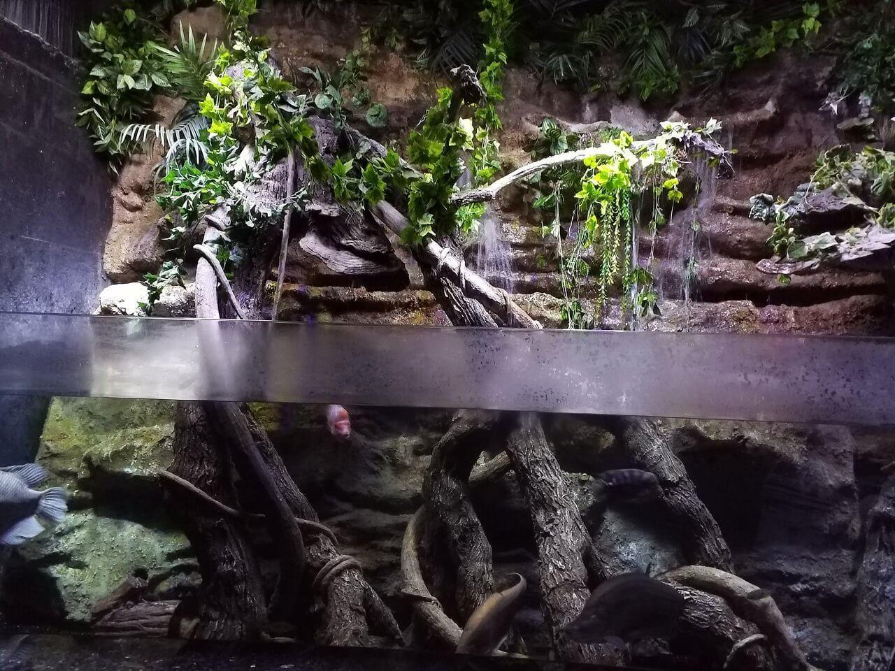 Стилизованный аквариум