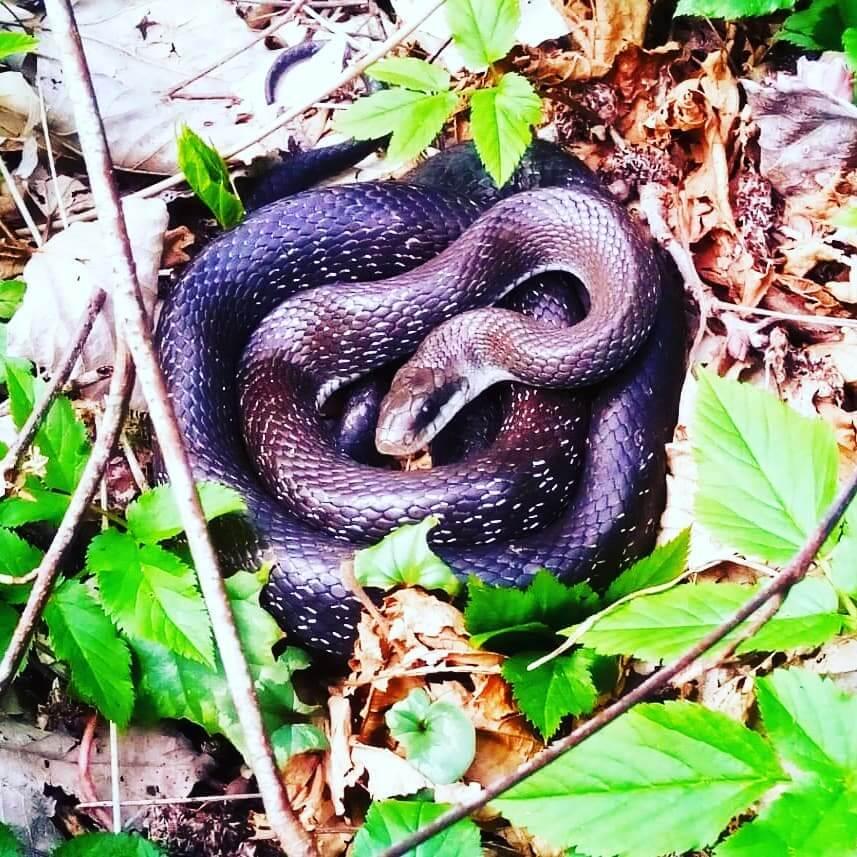 Клубок из змей