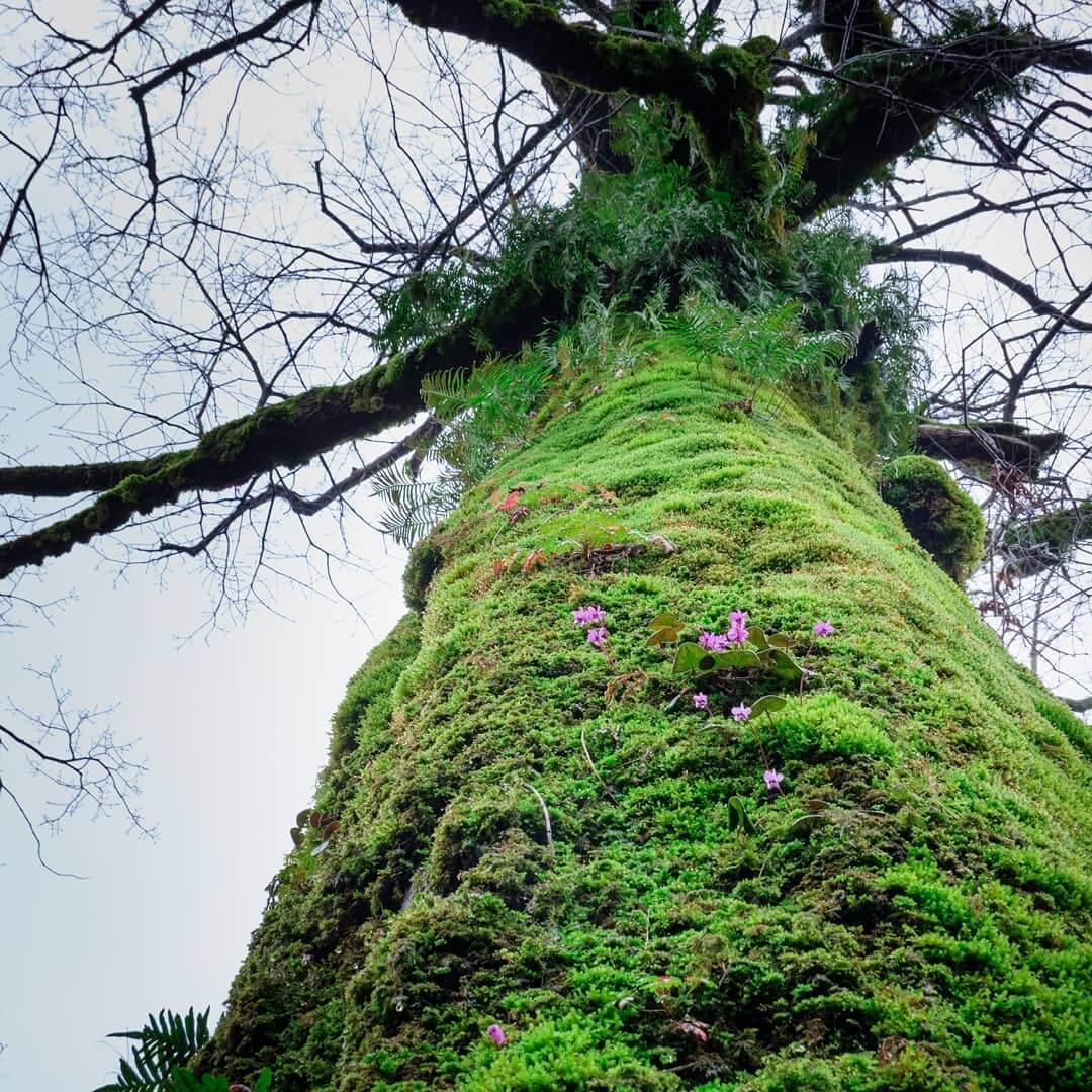 дерево во мху