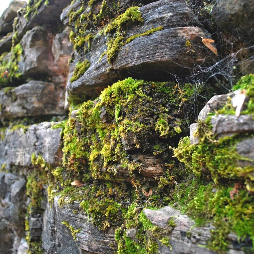 Стена вблизи