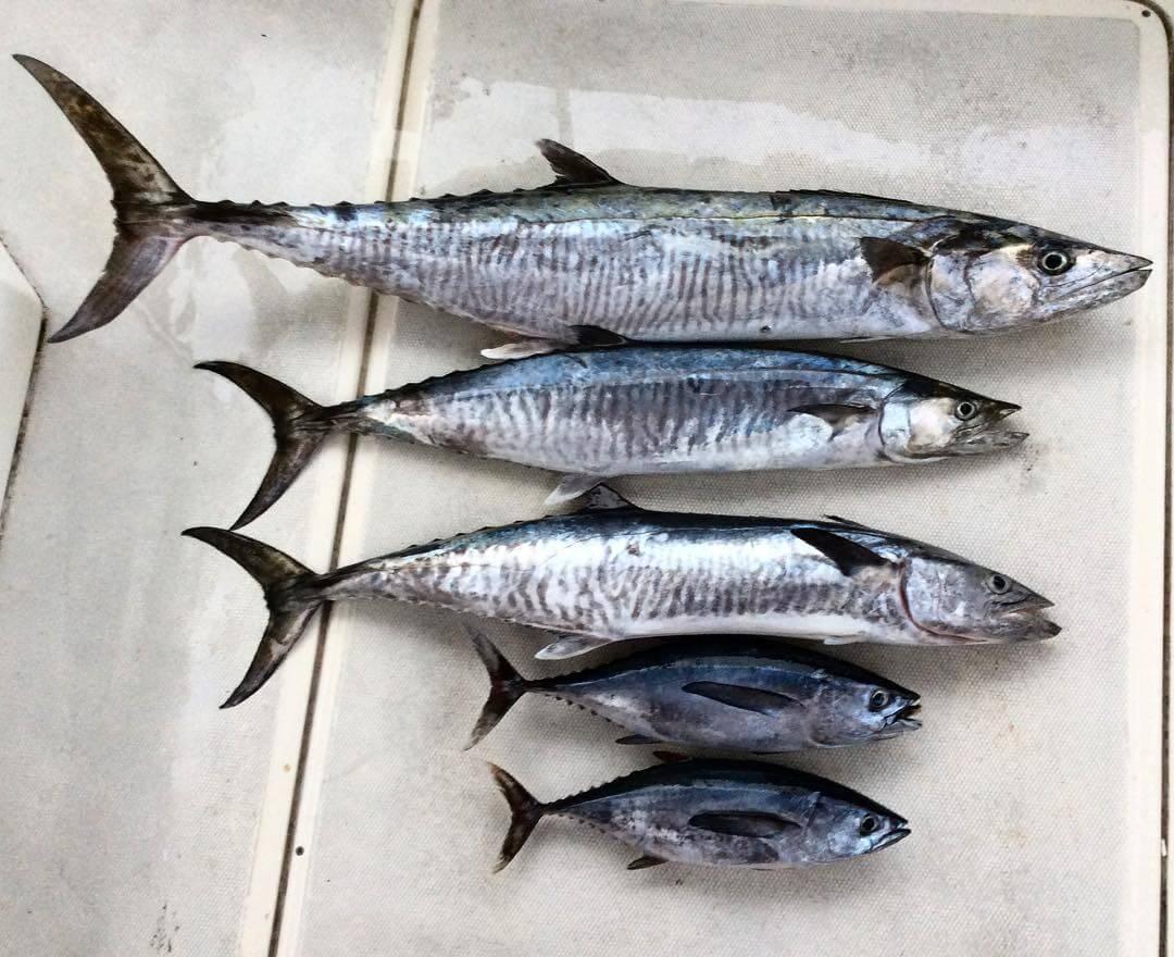 Подборка рыб
