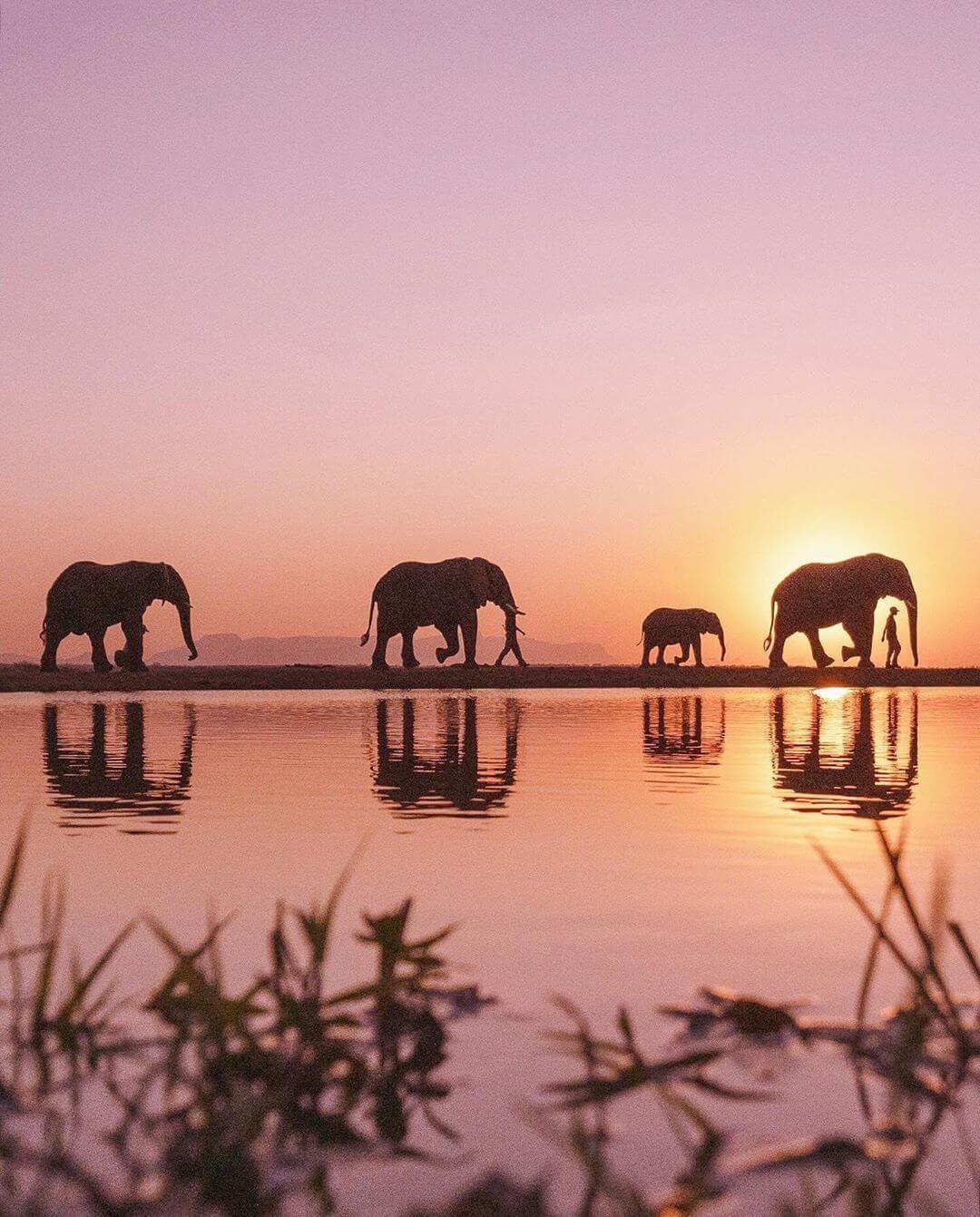 Группа слонов