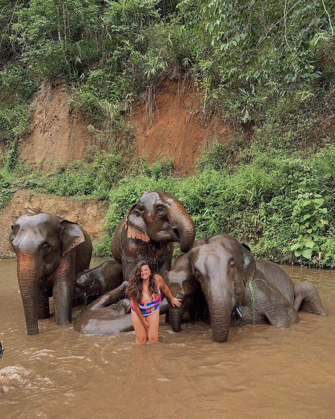 Со слонами веселее
