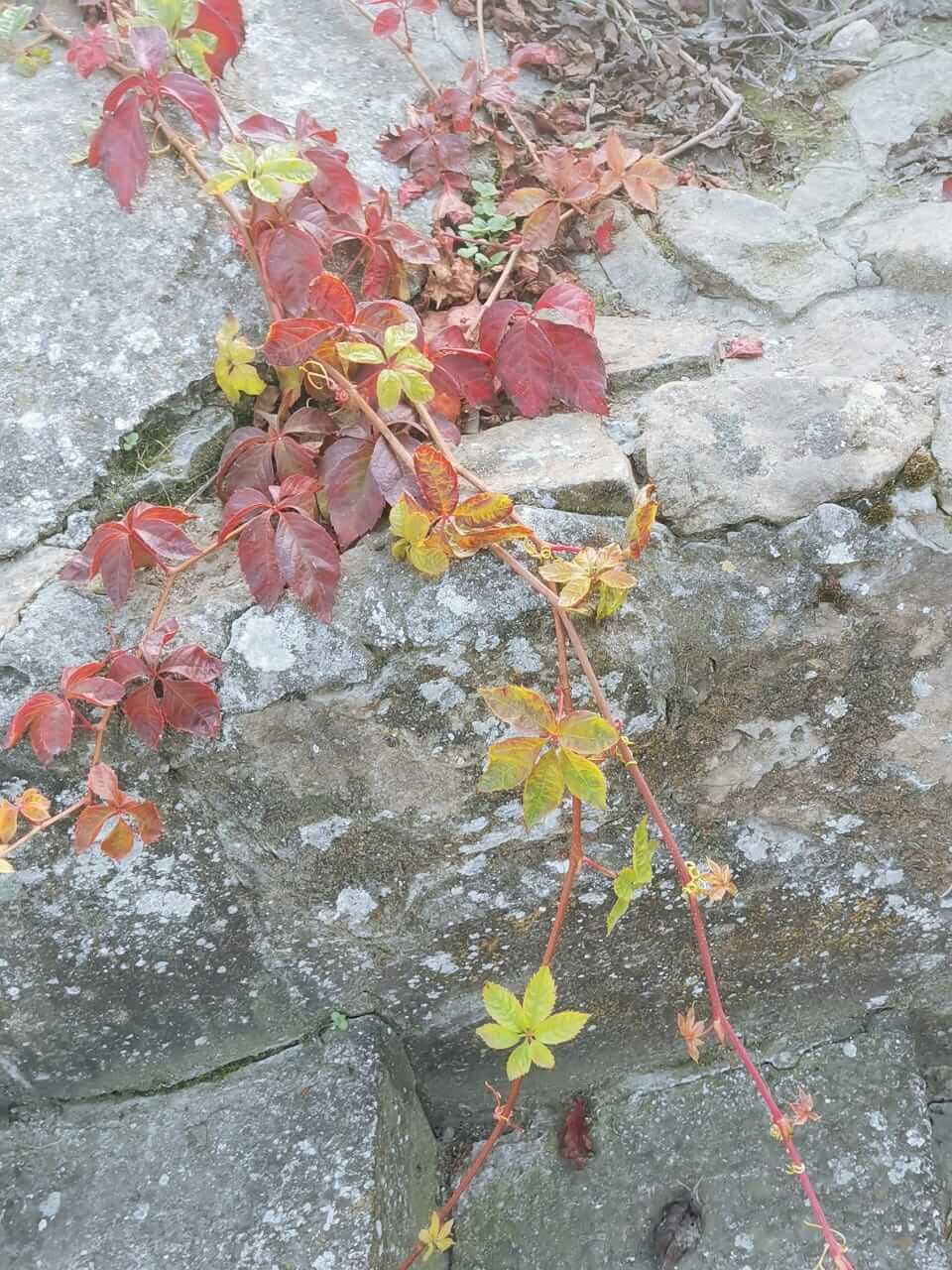 Осенний пейзаж