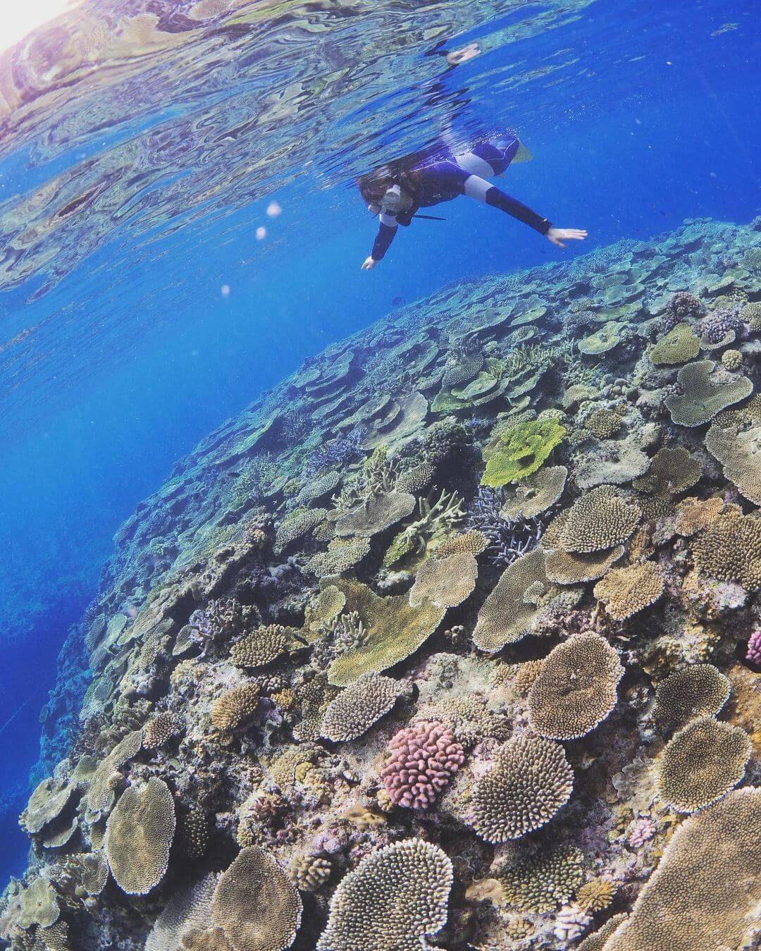 Подводный мир Окинавы