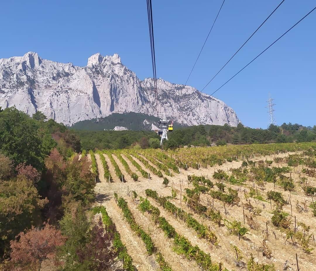 Вид на виноградные поля