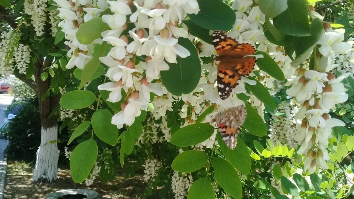 Сад райских бабочек