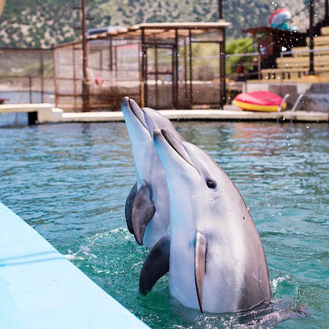 Дельфины Утриша
