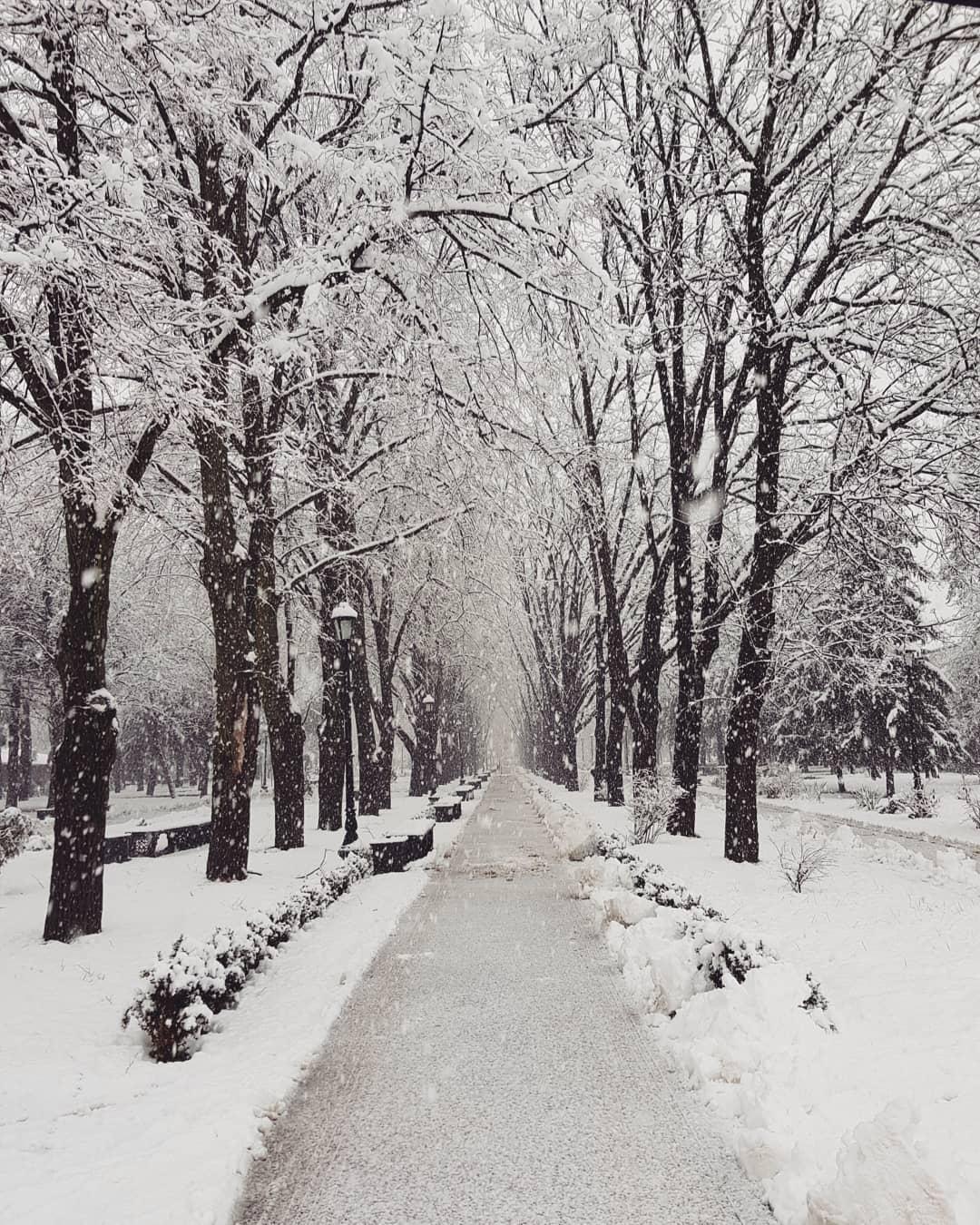 Роща в снегу