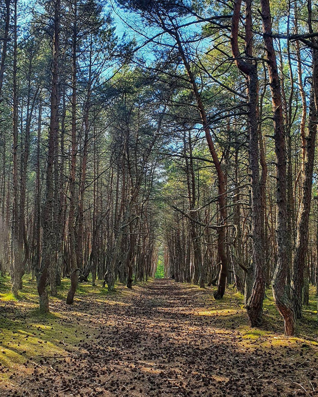 В лесу на косе